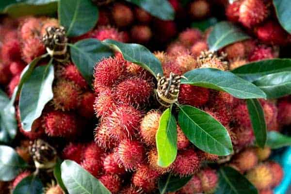 lychee-vs-rambutan