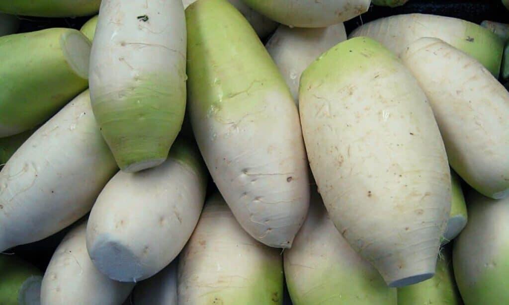 Korean White Radish